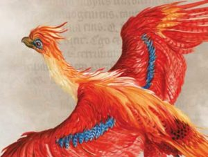 Harry Potter exhibition at Liverpool Central library